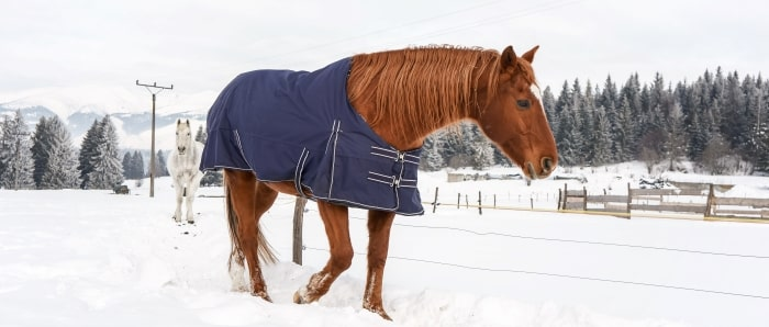 brown-horse-walking-in-snow